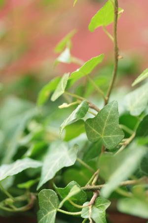 plante 5