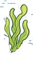 algues seules