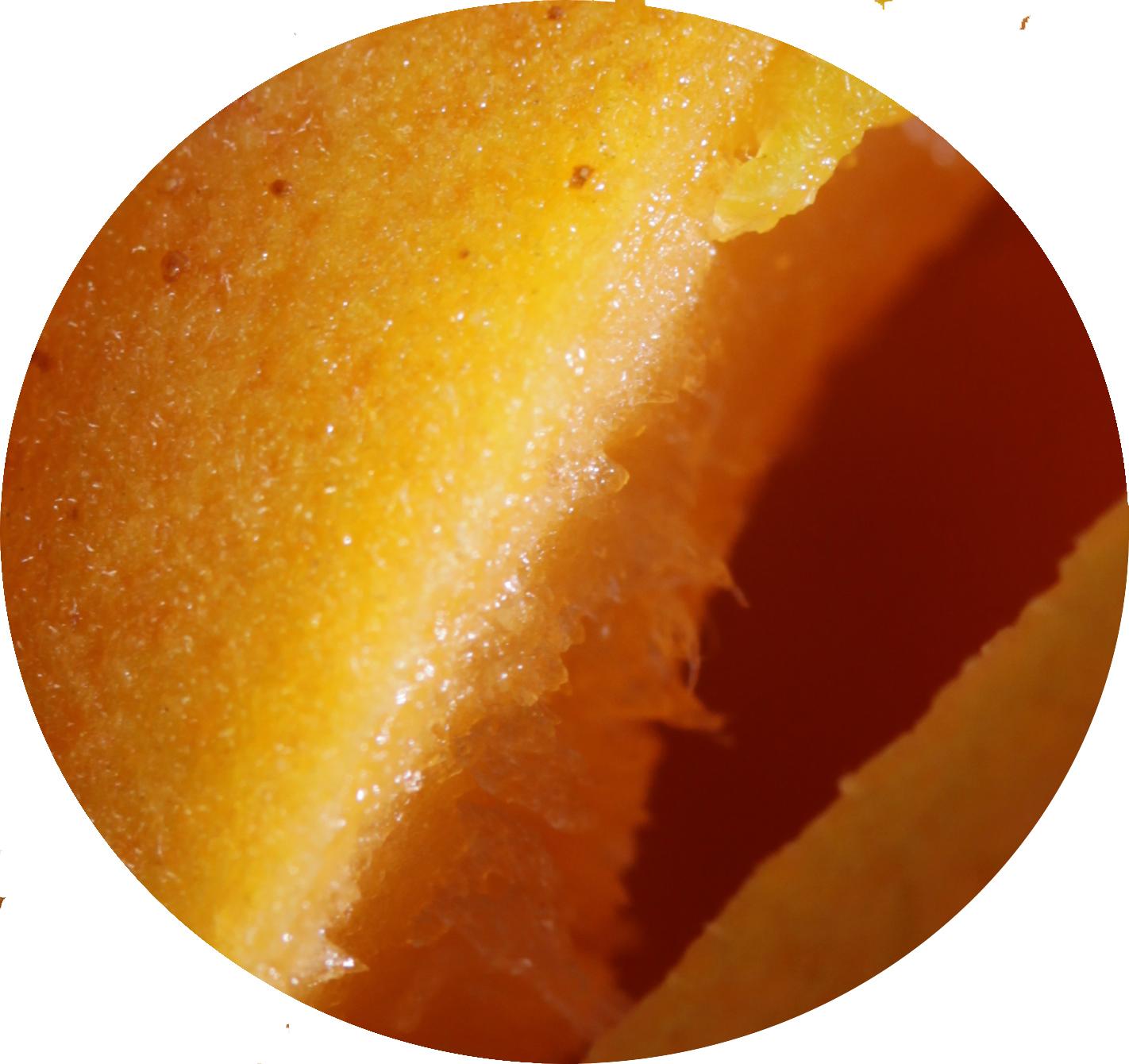 Abricot bulle OK