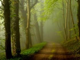 Chemin_de_chatillon__ForêtRosny_Nicolas_Prou600