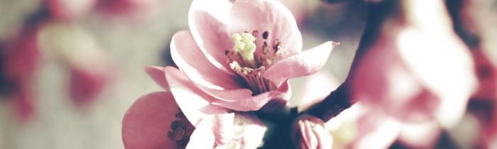 fleurs de cerisier vintage
