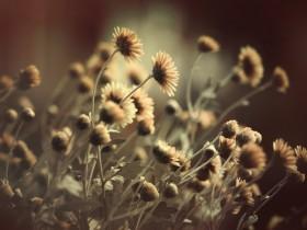 Fleurs à la Une