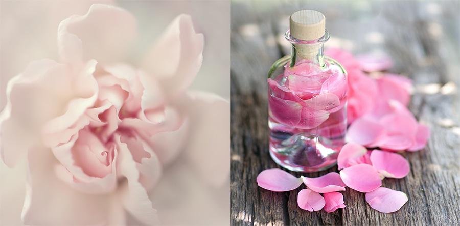 rose composite2