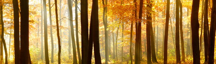 new-ambiance-energies-automne