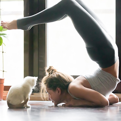 Young woman in variation of vrischikasana pose, home, cat near